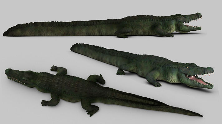 Zbrush Crocodiles